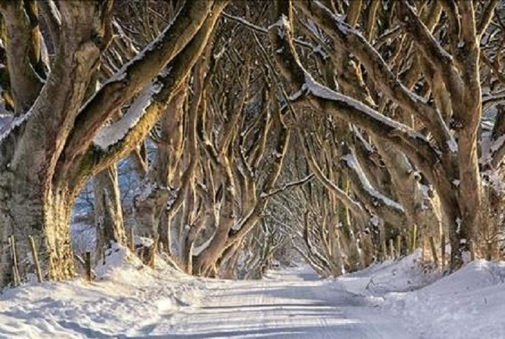 The Dark Hedges/discovernorthernireland.com